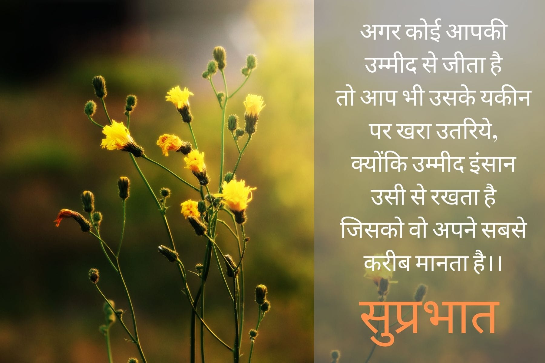 good_morning_with_hindi_quotes
