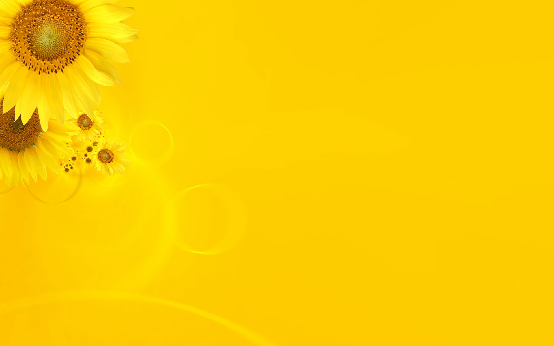 yellow_background_images